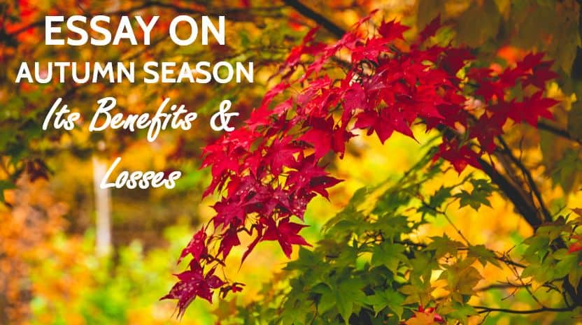 Essay on Autumn season in India for Students in 1200 Words