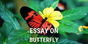 Essay on Butterfly for Students and Children in 1000+ Words