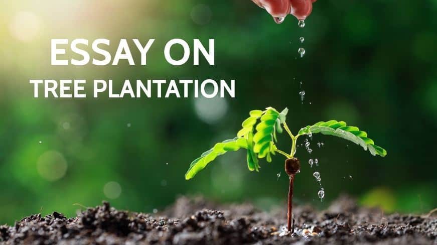 Essay on Tree Plantation for Students in 1000 Words