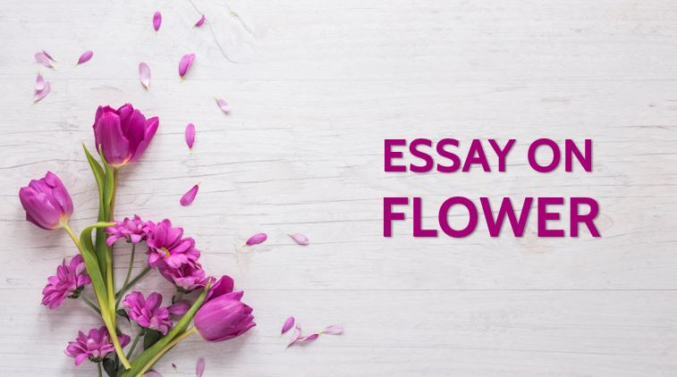 Essay on Flower for Students and Children 900 Words