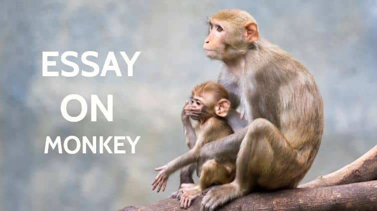 Essay on Monkey for Students and Children in 900 Words