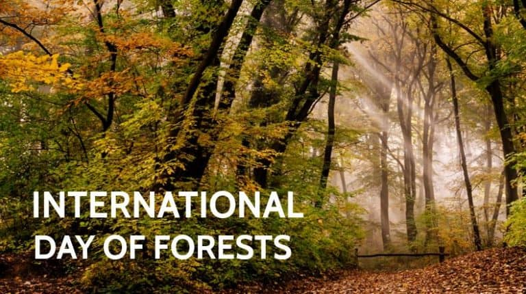 Here we have explained about International Day of Forests, which includes its date, history, importance, celebration, themes.