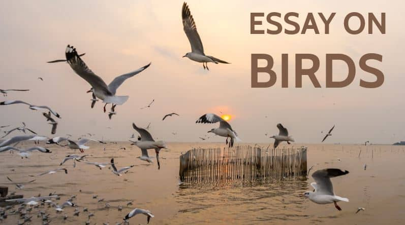 Photo of Essay on Birds for Students and Children in 1000+ Words